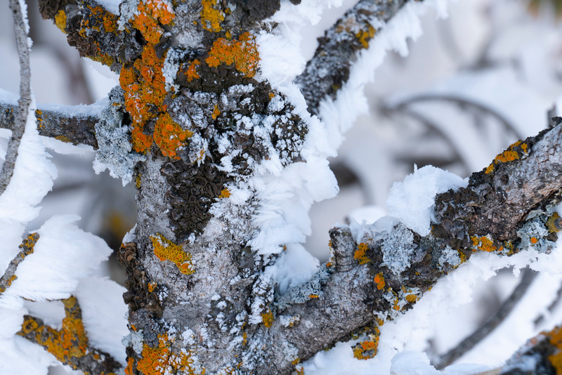 _AR71152 Frosted branch with lichen.jpg