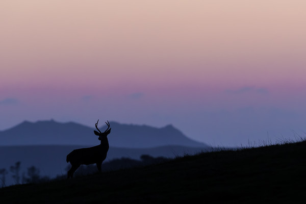 Elk and Deer-Please click on photos to view and purchase