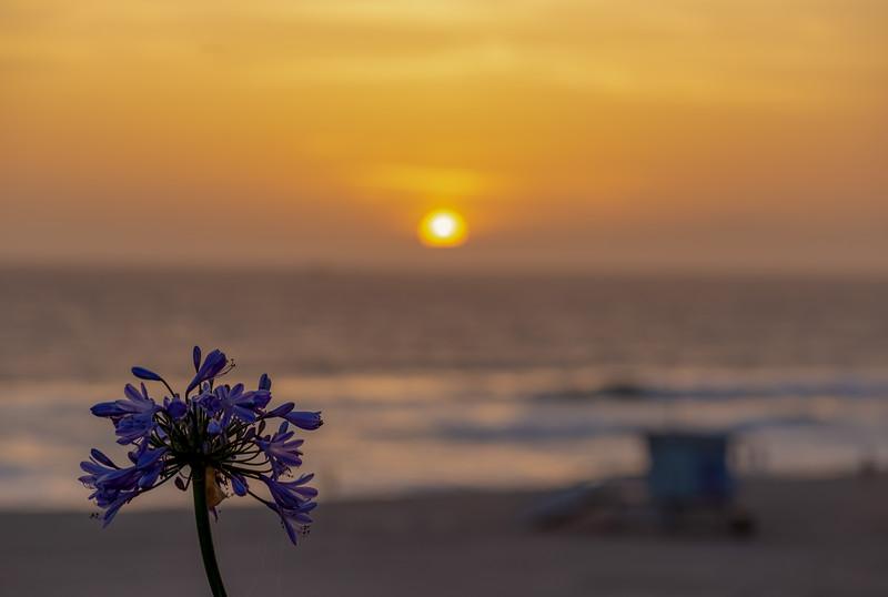 sunsets 2018-3365.jpg