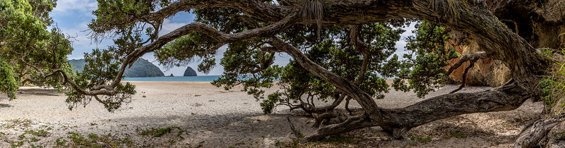 Pohutukawa an der New Chums Beach