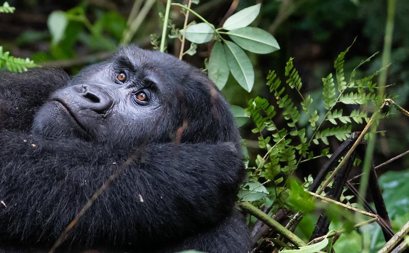 Uganda_T_Gor-191.jpg