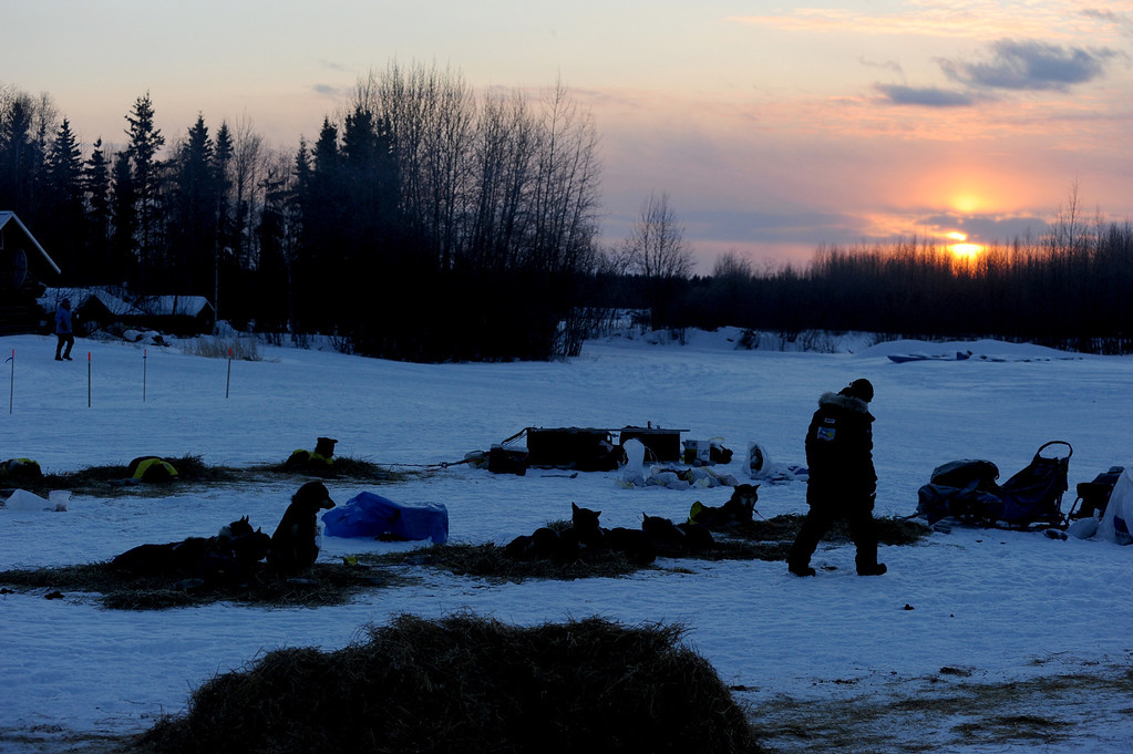 . A musher walks at the Nikolai, Alaska, checkpoint during the Iditarod Trail Sled Dog Race at sunrise on Wednesday, March 5, 2014. (AP Photo/Anchorage Daily News, Bob Hallinen)