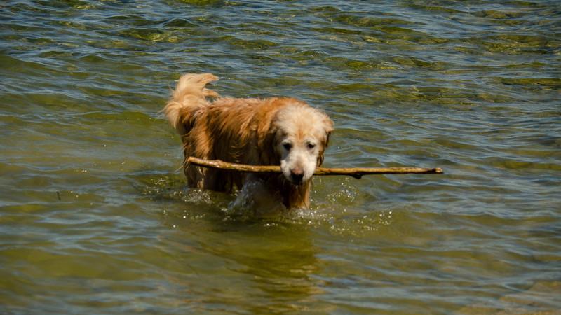 PuppyParty18-242.jpg