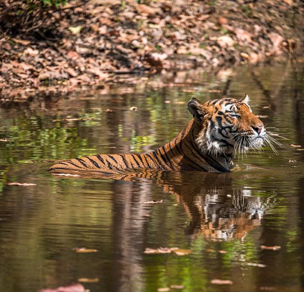 India_April_2019-1183.jpg