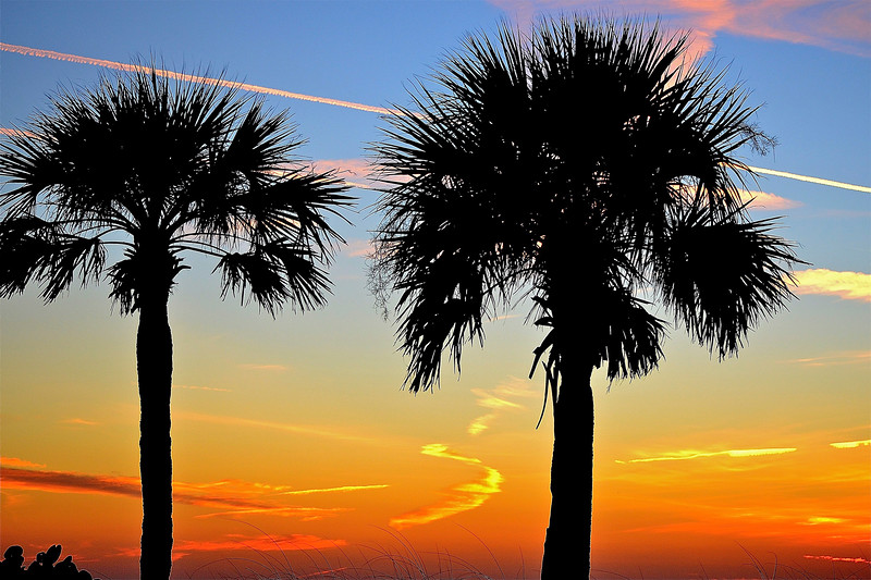 1_10_19 Sunset Palms with Chemtrails.jpg