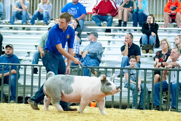 Tulsa Gilt Show Day 2