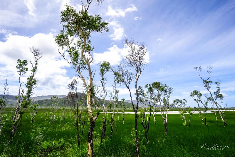 Trees of New Caledonia