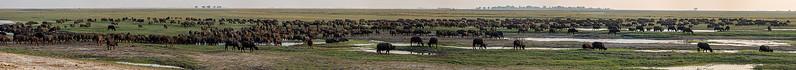 Botswana_0818_PSokol-5415-Pano.jpg
