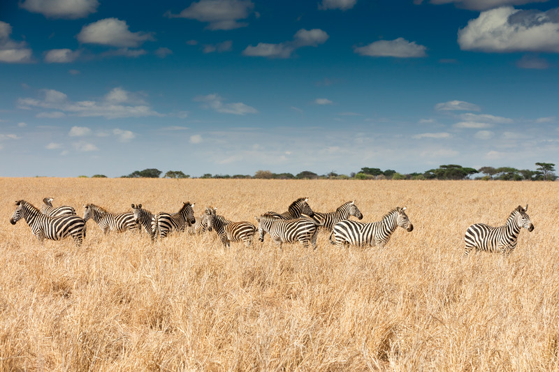 Africa - 102116 - 8107.jpg