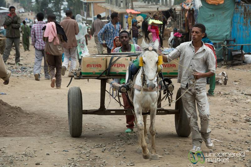Horsecart at the Debark Market - Ethiopia