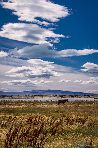 Clouds and horses, on the steppes and marshes outside El Calafate, Argentina.