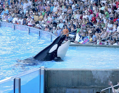Seaworld. Orlando, Florida