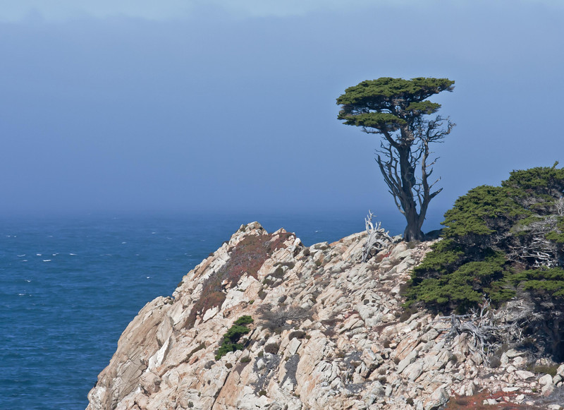 The point at the Cypress Grove, Point Lobos, California