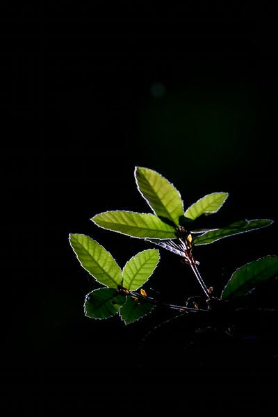 PL_Tree_Big_sur_2014_FH0T1634.jpg