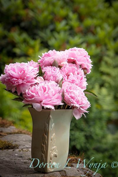 Paeonia lactiflora 'Sarah Bernhardt - Peony cut flowers_1202.jpg