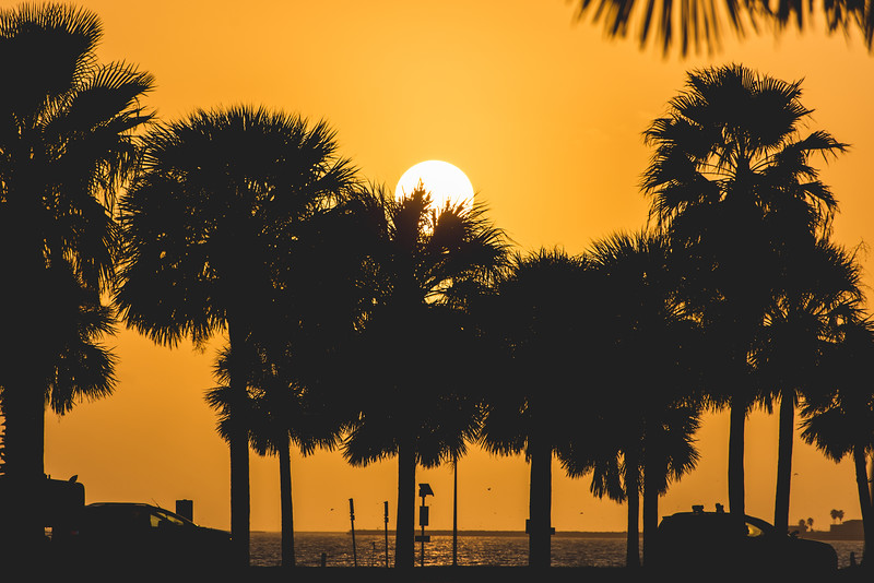The palm trees silhouette against the rising sun as commuters make their way to campus.