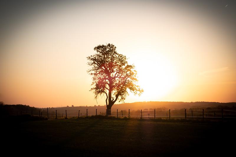 The Tree -  Image by Panagiotis Xipteras.jpg