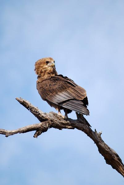 Bird 012.JPG