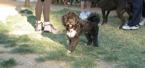 5 - 21 - 2010 Ayora Dog Park