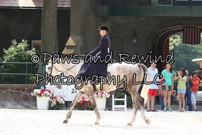 Class 101 Ladies Hunter Side Saddle Under Saddle