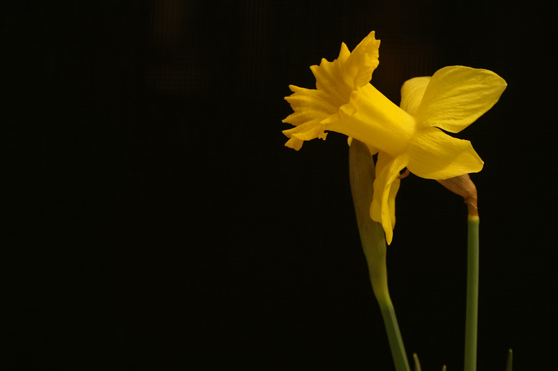 Yel Flower02.jpg