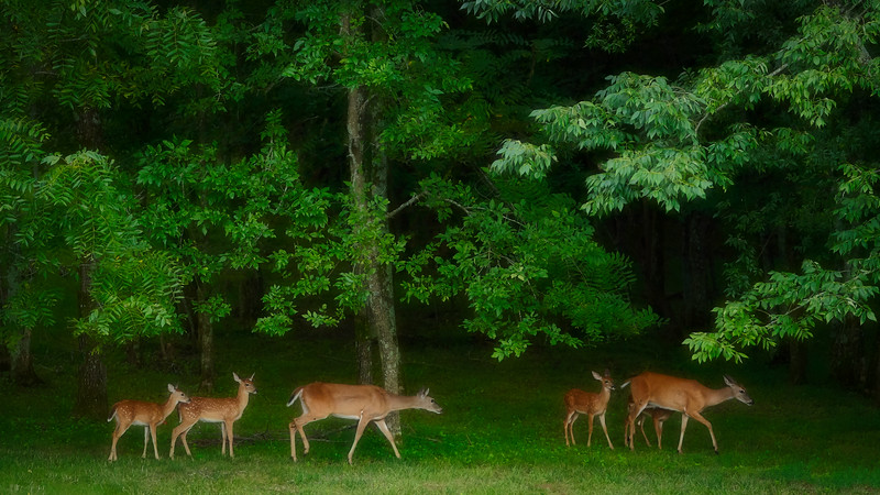 2 Does, each with 2 Fawns