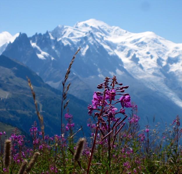 Tour du Mont Blanc - August 2015