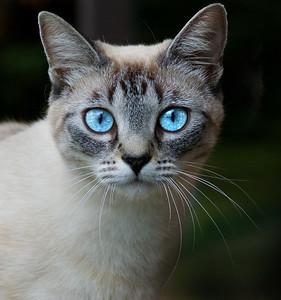 Cats - Meow