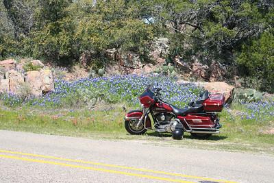 Park Road 4 Wildflowers