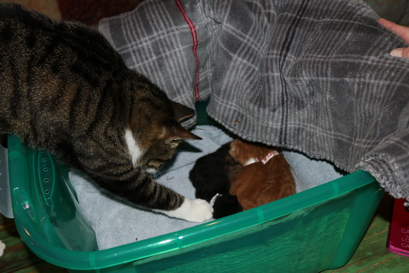 Trapping Mom and Kittens - 040115 - 4.JPG