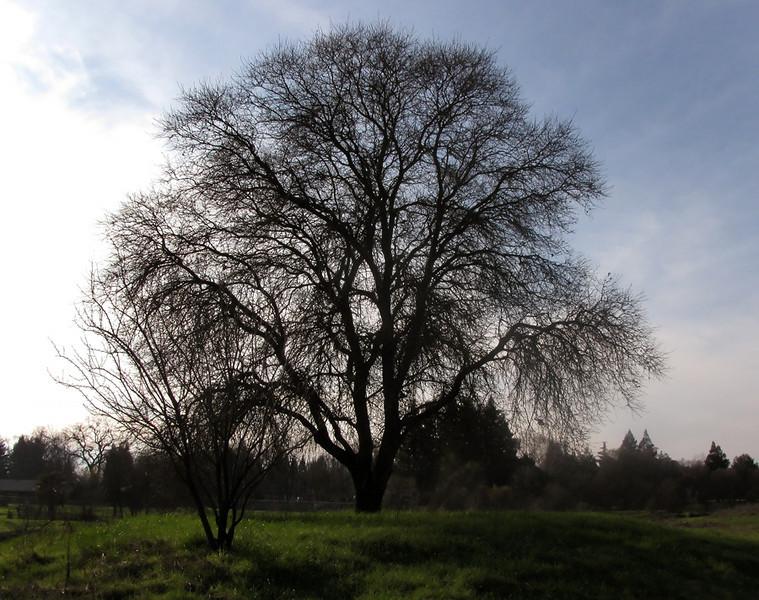 lagunatree.jpg