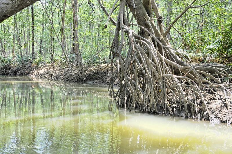 311-1044-CrocSafari-Mangrove.jpg