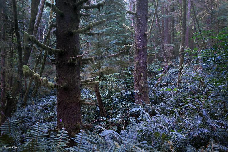 Ecola Rain Forest