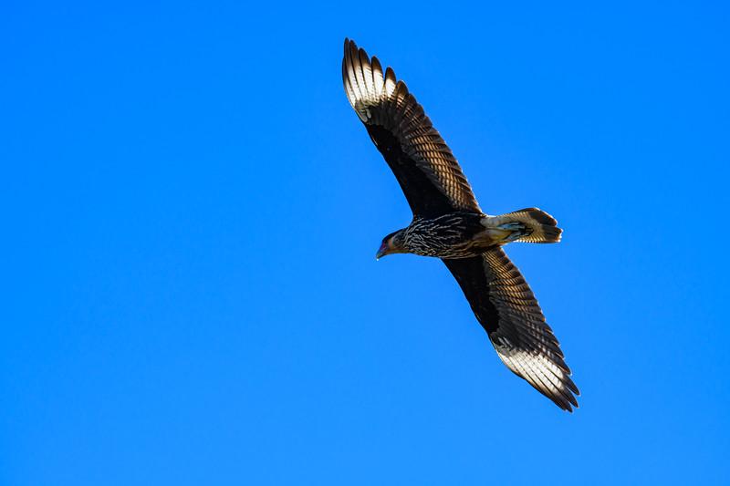 20190409__KET1466_Birds6628.jpg