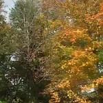 Fall pics 2008 041.avi