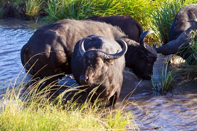 Kenya - Amboseli and Masa Mara 3-21-12