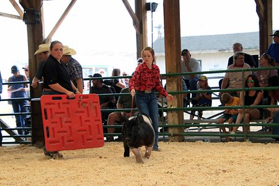 Market Swine 6