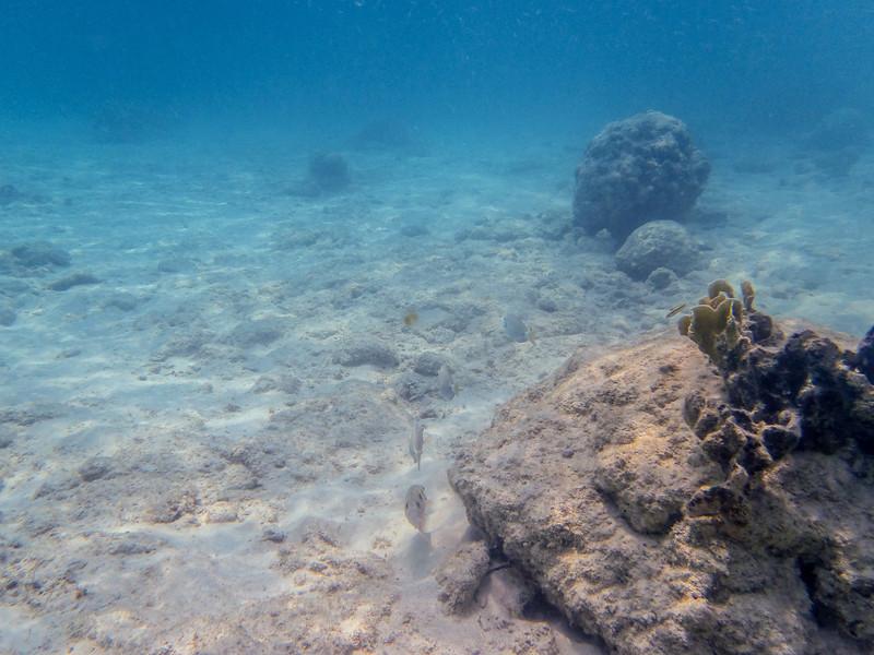 Isla Pelicano