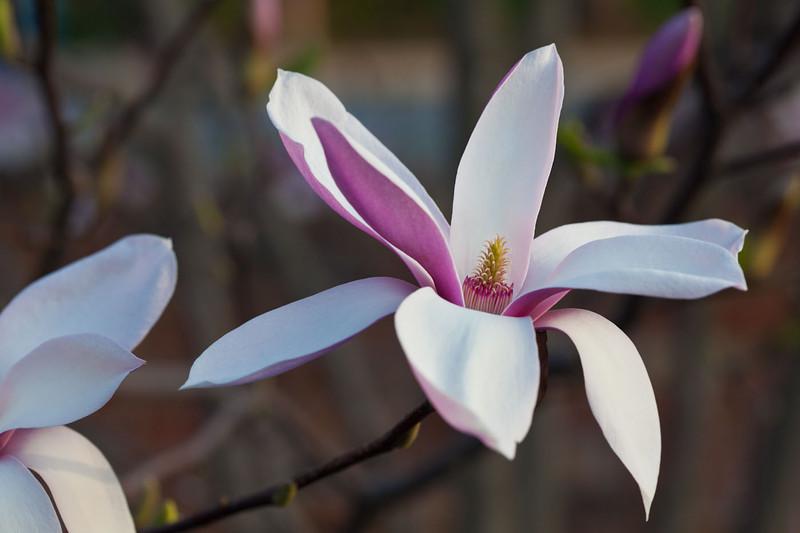 Magnolias13-9248.jpg