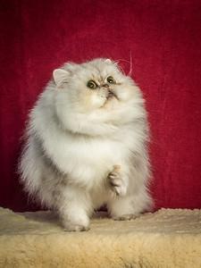 Ginkgo, Persian