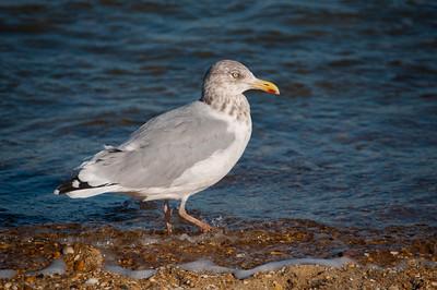 20151011 Sea Girt Beach Walk