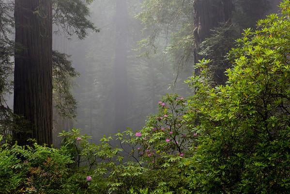 Del Norte Coast Redwoods State Park CA