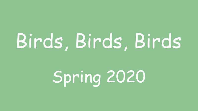 Birds, Birds, Birds.mp4