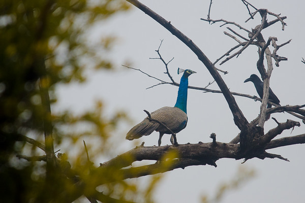 Bharatpur-Jan-2015