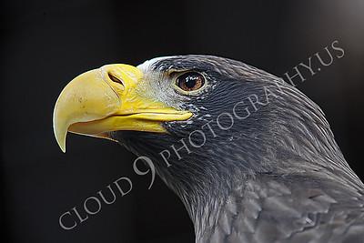 Wildlife Photography Portfolio 4