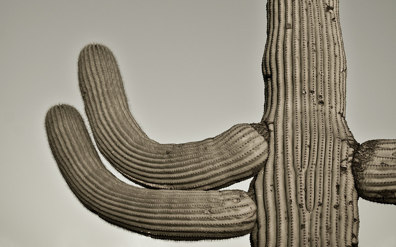 Wallpaper, widescreen (16 x 10 - 2592px x 1620px). Saguaro (what else?) between Gates Pass and the Arizona Sonora Desert Museum, Tucson.