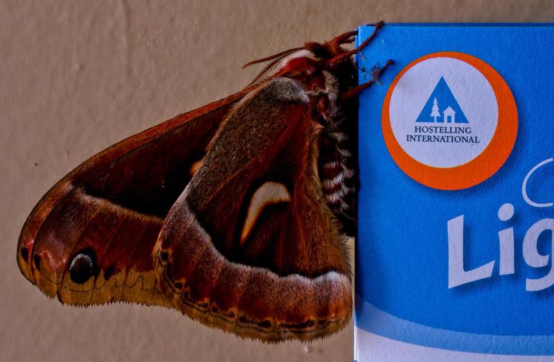 Silk Moth HI symbol