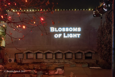 Blossoms of Light