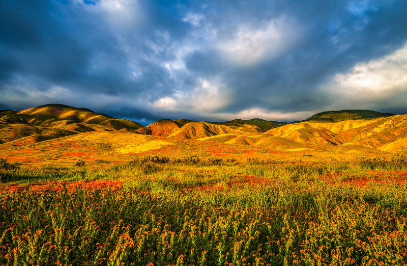 Carrizo Plain National Monument Wildflowers Superbloom Spring Symphony #7!  Elliot McGucken Fine Art Landscape Nature Photography Prints & Luxury Wall Art