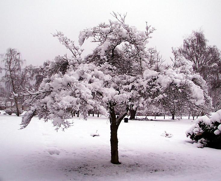 1-30-2002-snow#2.jpg
